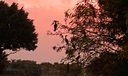32_Ibis-sunset