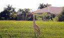 12_Ibis_wildlife2