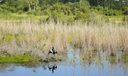 11_Ibis_wildlife