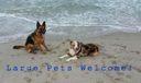 Luna River Jupiter Beach Large Pets Welc
