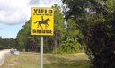 Caloosa_horses