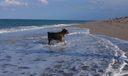 Jupiter Beach dog beach