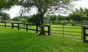 shady grass paddocks