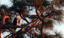 Sunset Stuart Osprey