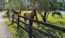 Horse Lovers Dream