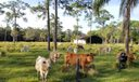 Acres Of Fenced Pasture