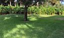green space outside your home