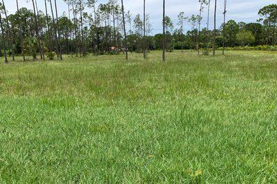 00000 Cocoa Plum Road 1