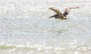 Beach Lifestyle_Bird-in-flight-6 (1)