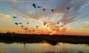 View Daily Ibis Migration