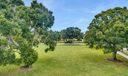 Lush Green Space