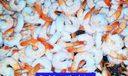 L244. Don't forget the Shrimp
