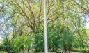 Heratige Oaks Russo-0056