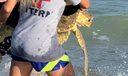 Loggerhead Turtle Rescue