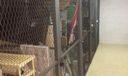 sandpointe bay cage storage