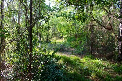 M-95 133rd Trail N 1