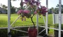 Patio View Bouganvilla
