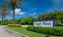 Sugar Pines 4