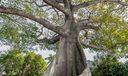Kaypok Tree Lake Trail Palm Beach