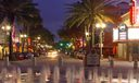 Clematis West Palm by Night 2012 AAP