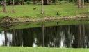 Otters at the Lake